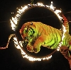 Цирки в Полевском
