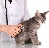 Ветеринарные клиники в Полевском